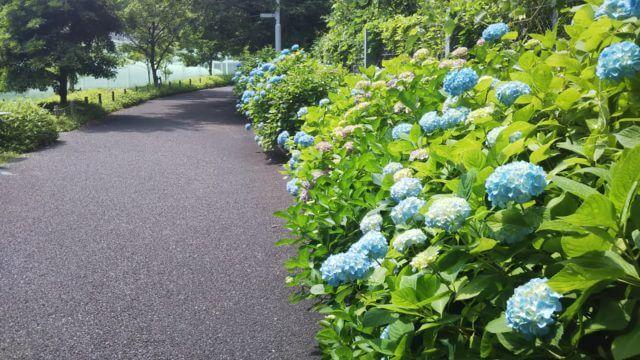 色づき始めた青の小路