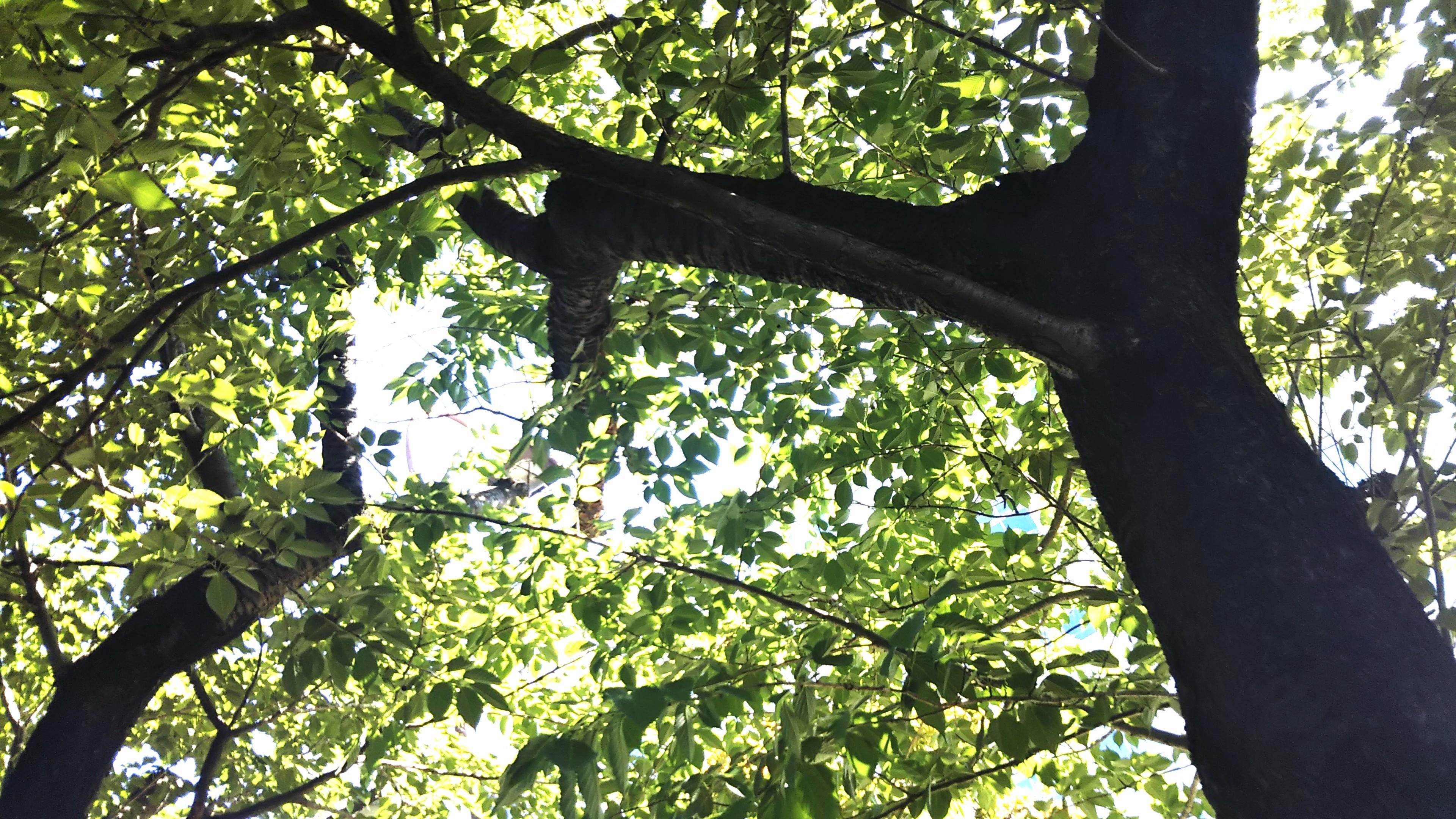 桜の葉っぱを透かした空
