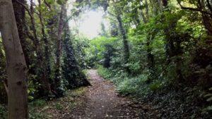 森の小路を抜けていくと