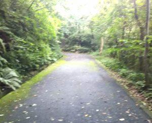 遠回りだけれど歩きやすい舗装道路
