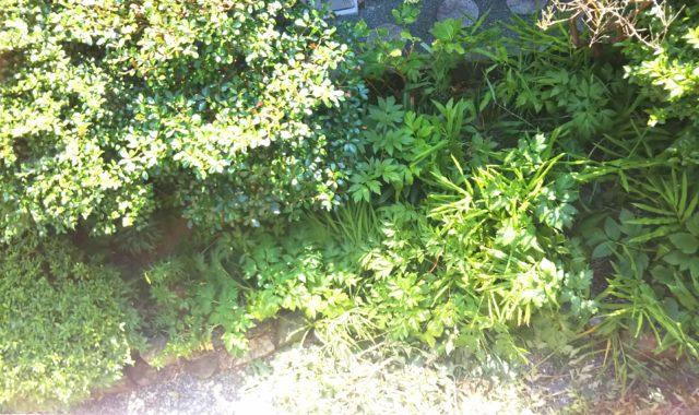 庭木と草が生い茂る庭