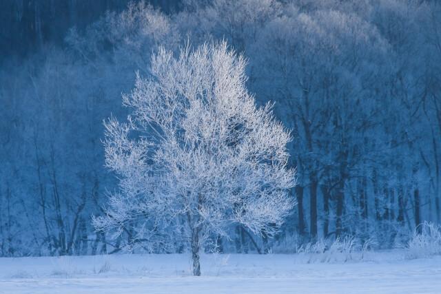 雪原の大樹